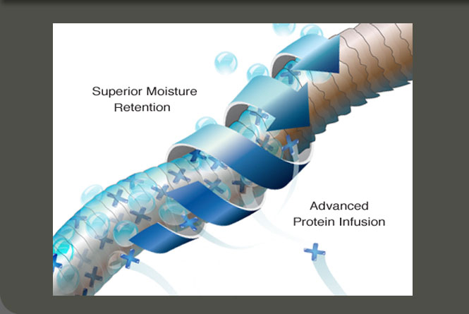 Digital illustration depicting the  science behind the Nutress conditioning of a protein blend with moisturizers. Used on  show banners, in trade ads,  websites, and merchandising.